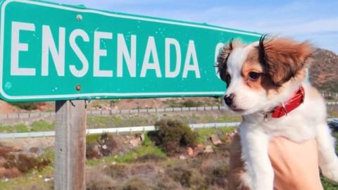 """9 lugares en Valle de Guadalupe """"pet friendly"""" para visitar con tu mascota"""